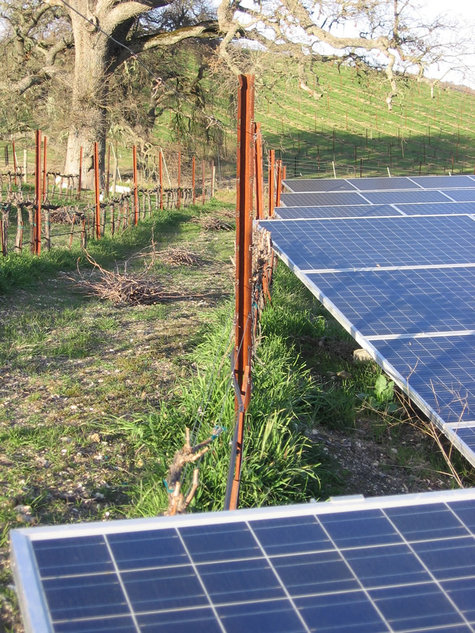 Solar_panels_and_mourvedre
