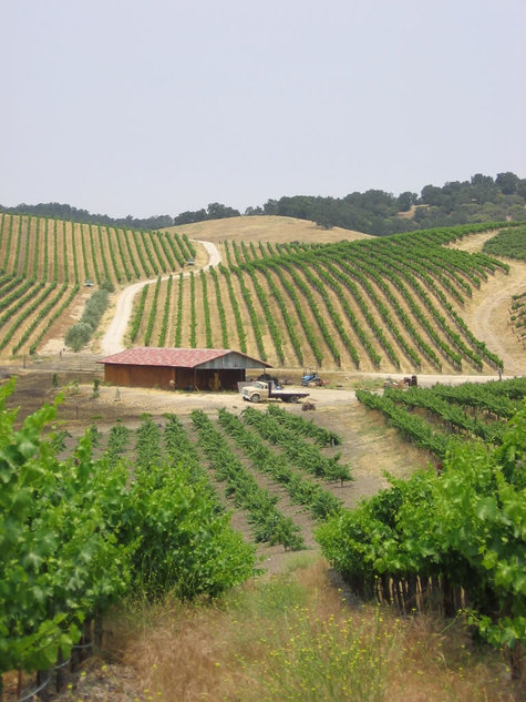 June_vineyard_view