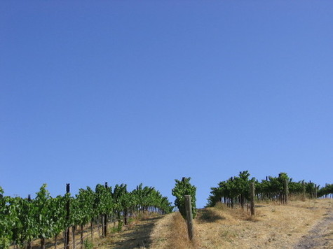 Grenache_and_sky