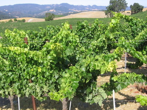 View_west_over_grenache