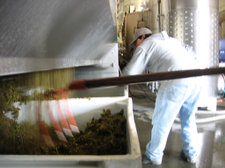 Bergeron grape stems, seeds, and skins are cleaned out of the press