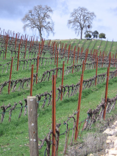 Dormant_vineyard_pruned_small_1