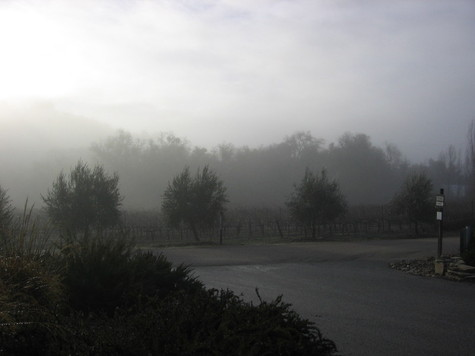 Foggy_morning_3