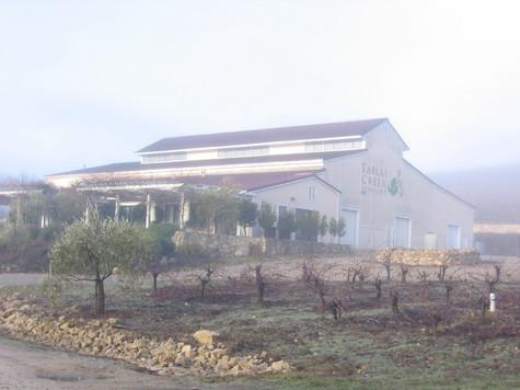 Foggy_morning_7