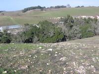 A view looking back across Tablas Creek from Scruffy Hill