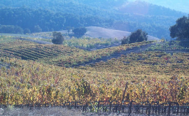 Vineyard_in_autumn_1